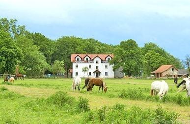 Gospodarstwo-Agroturystyczne-Na-Plebanii-Brodnica-799084